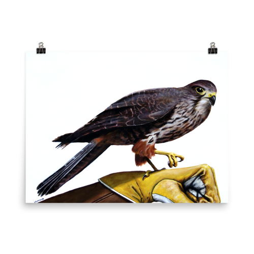 Captain Falcon Falcon (without hat) - Matte Poster Print