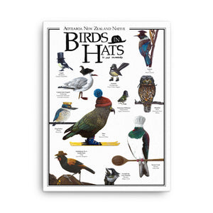 Aotearoa New Zealand Native Birds In Hats - Canvas Print