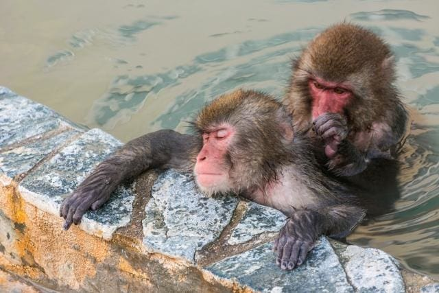 Monkey is also happy!? The attractiveness of Onsen!!
