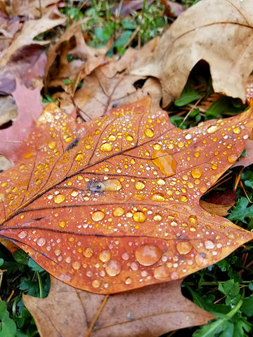 Leaf on Ground with Rain Drops