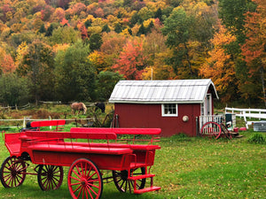 Wagon, Horses and Foliage in VT
