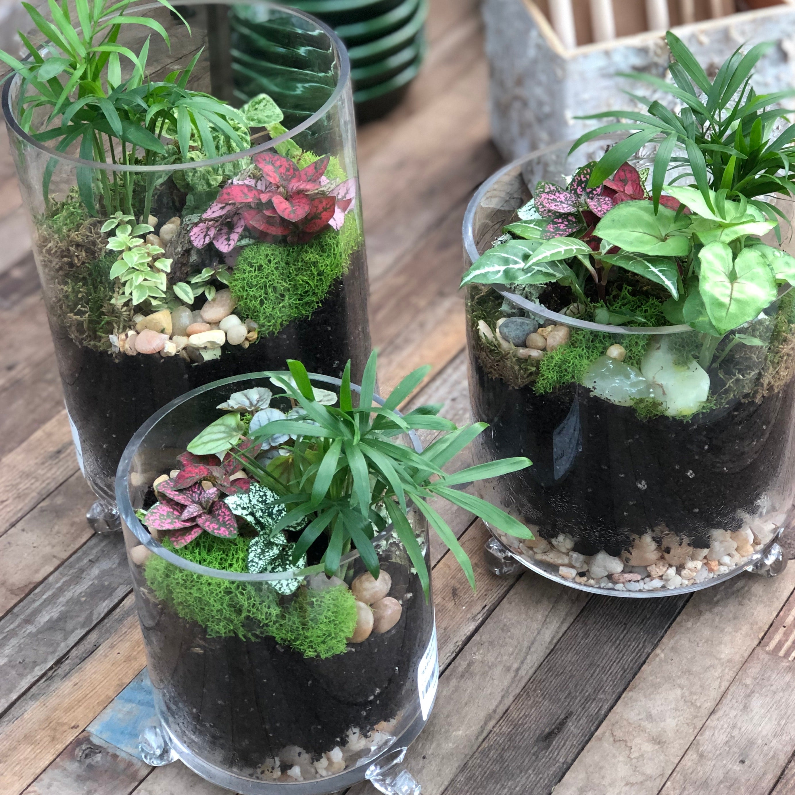 Cylinder Footed Terrarium