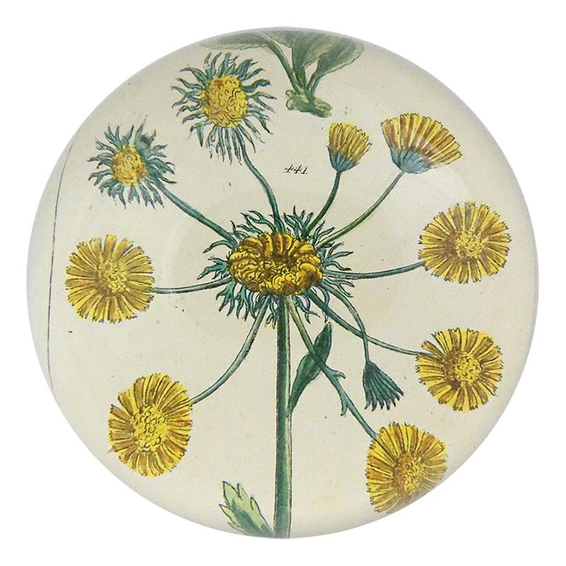 Yellow Aster Paperweight