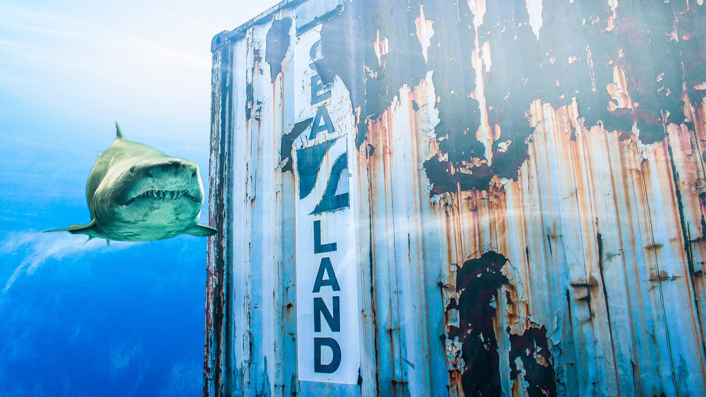 shark swims past shipping container
