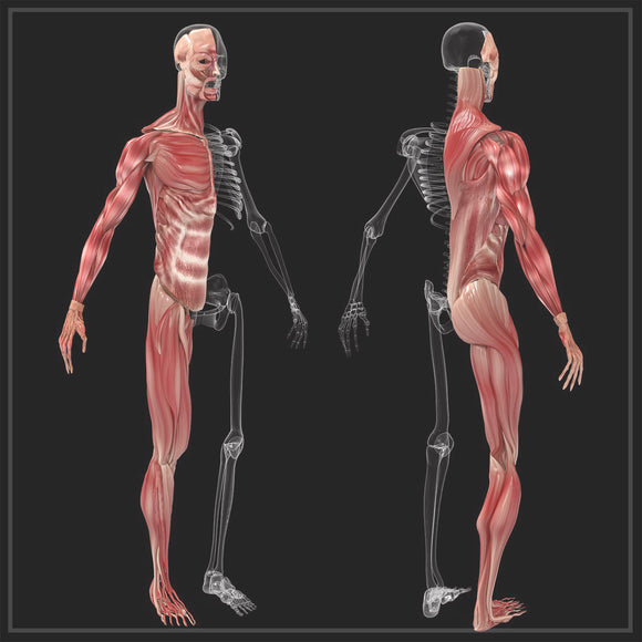 Exploring Fascia / Connective Tissue