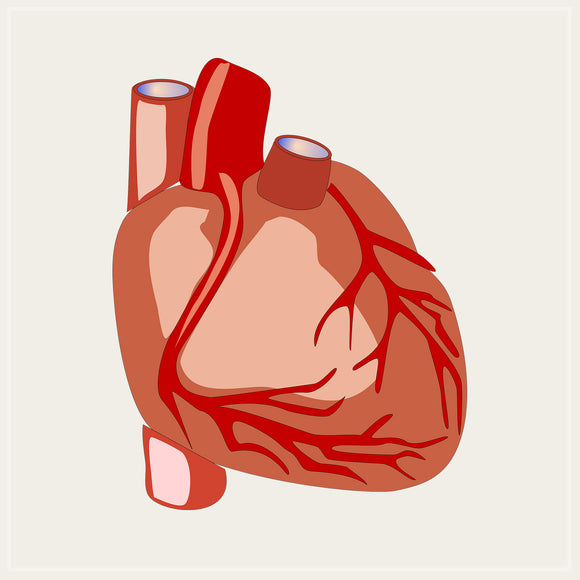 Deep Cleaning the Physical Heart: Part 1 & 2