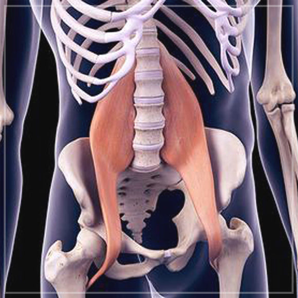 Releasing the Psoas Muscle (Hips / Low Back)