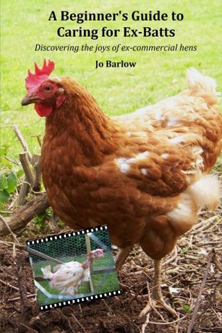 A Beginners Guide to Caring for Ex-Batts: Discovering the Joy of Ex-Commercial Hens
