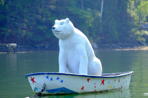 Polar Bear in rowboat