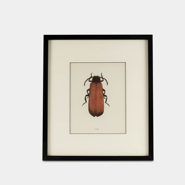 Framed bug print front view