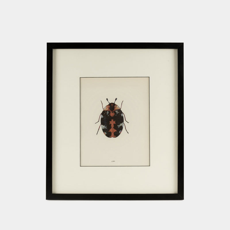 Set of Framed Bug Prints