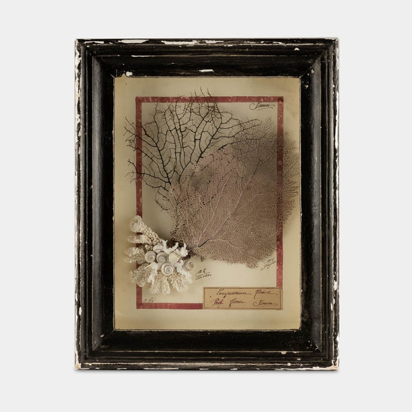 Vintage Wood Framed Blush Sea Fan