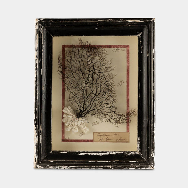 Vintage Wood Framed Sea Fan