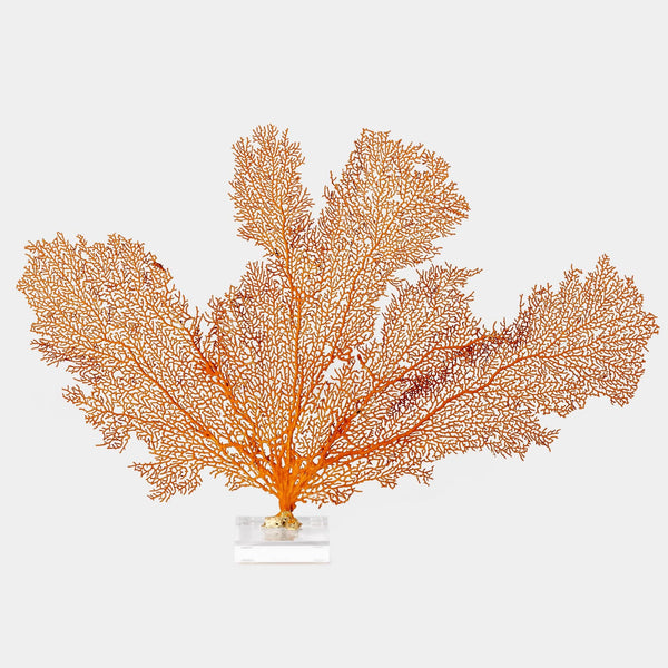 Coral sea fan on lucite base front view
