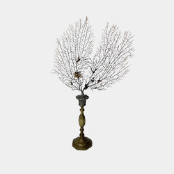 Sea Fan on Brass Candlestick #1