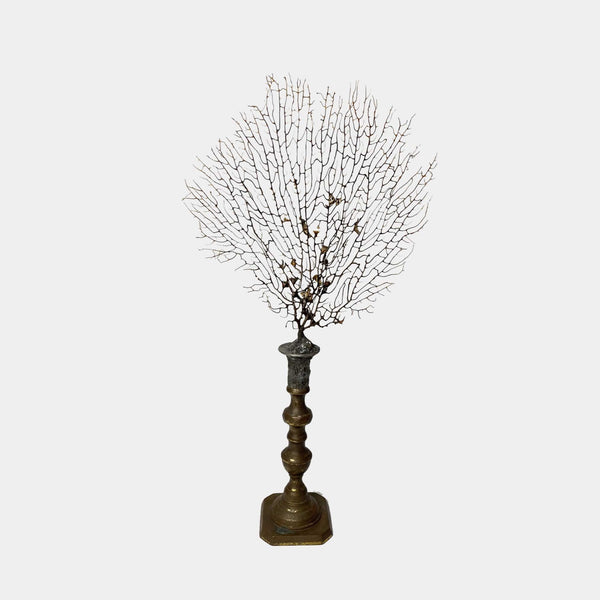 Sea Fan on Brass Candlestick #3