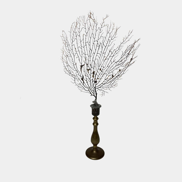 Sea Fan on Brass Candlestick #4