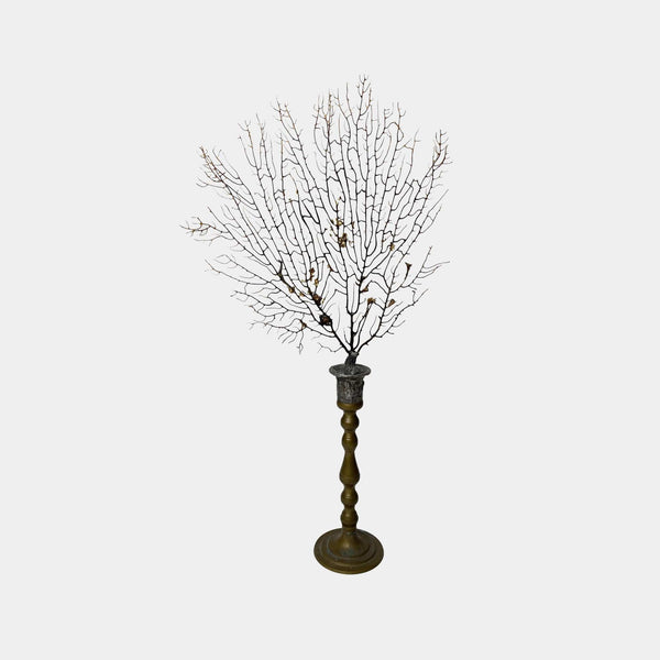 Sea Fan on Brass Candlestick #2