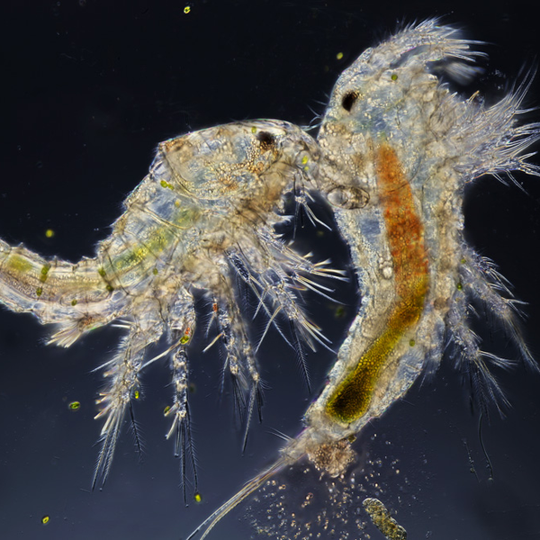 Copepod Speed and Strength