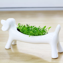 2 Pieces Dog Mini Ceramic Flowerpot Planters With Gift Box