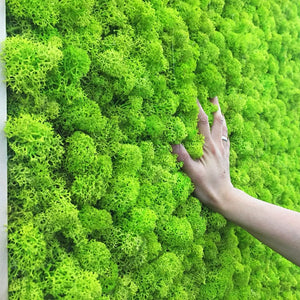Archi High Quality Artificial Moss Plant - Premium Home Ideas
