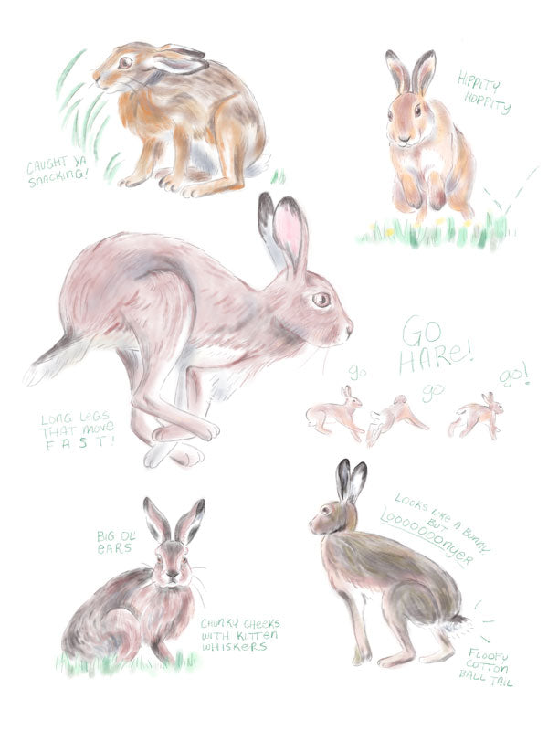 "Nursery Art Print - Hare Anatomy Studies - ""Curated by You"" Tortoise and Hare Art Collection"