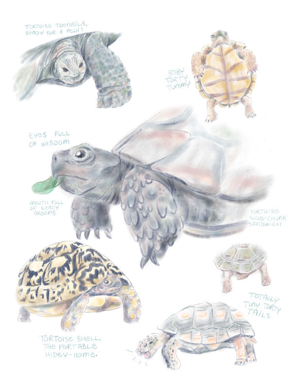 "Nursery Art Print - Tortoise Anatomy Studies - ""Curated by You"" Tortoise and Hare Art Collection"