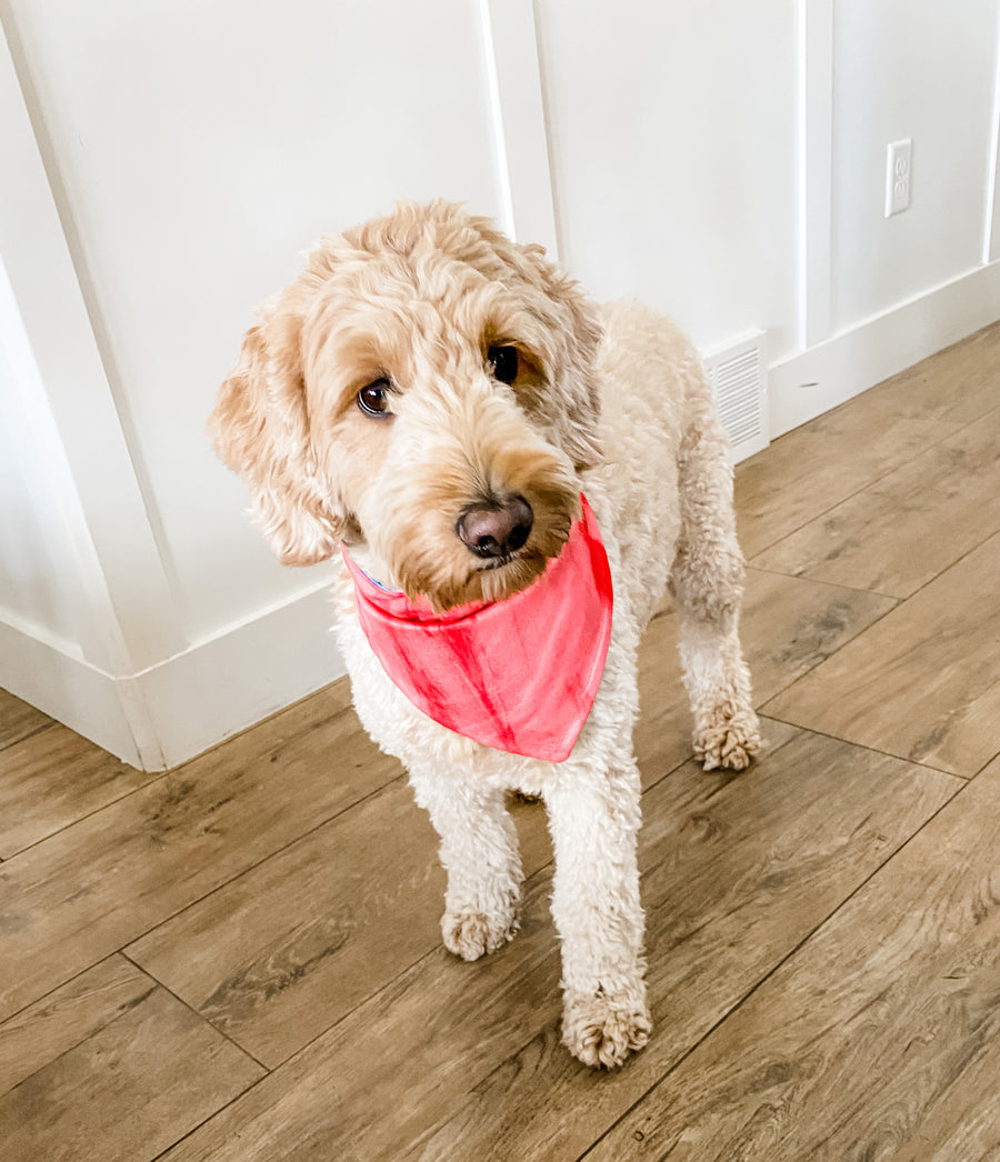 Tidal/ Bright Coral Reversible Dog Bandana