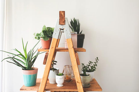 Plants on a ladder