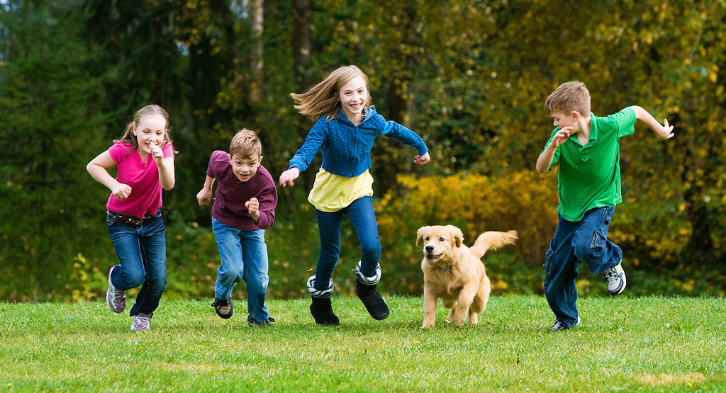 How To Keep Your Dog & Kids Safe When Playing Together
