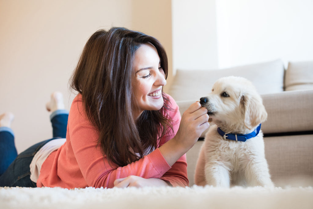 Separation anxiety: teach your puppy to be alone How to prevent puppy separation anxiety