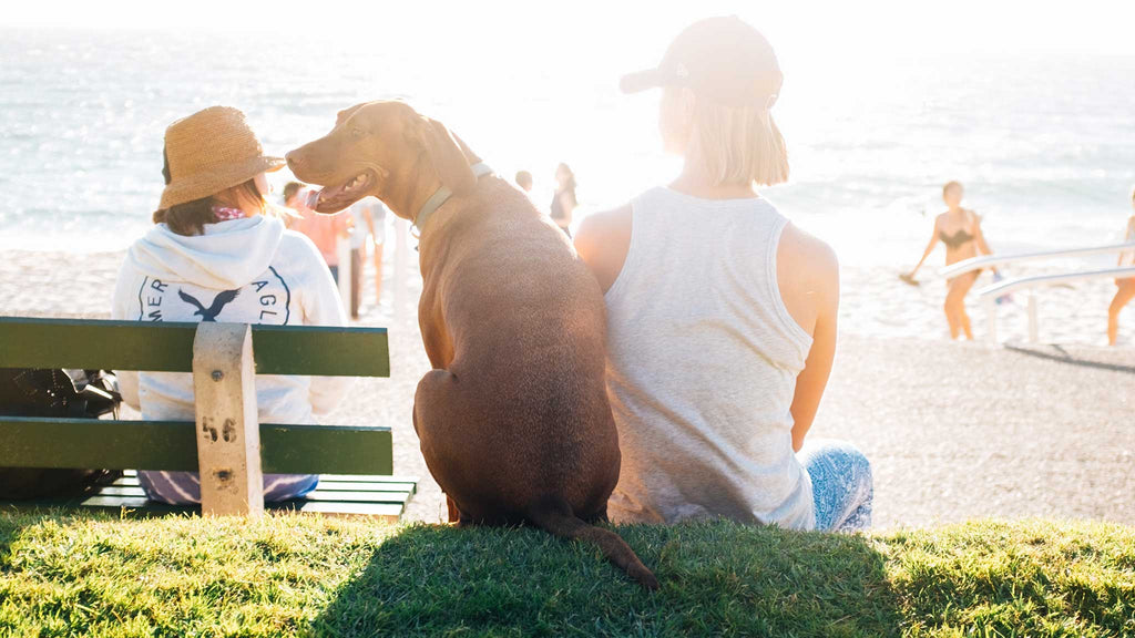 How to Look After Your Dog This Summer