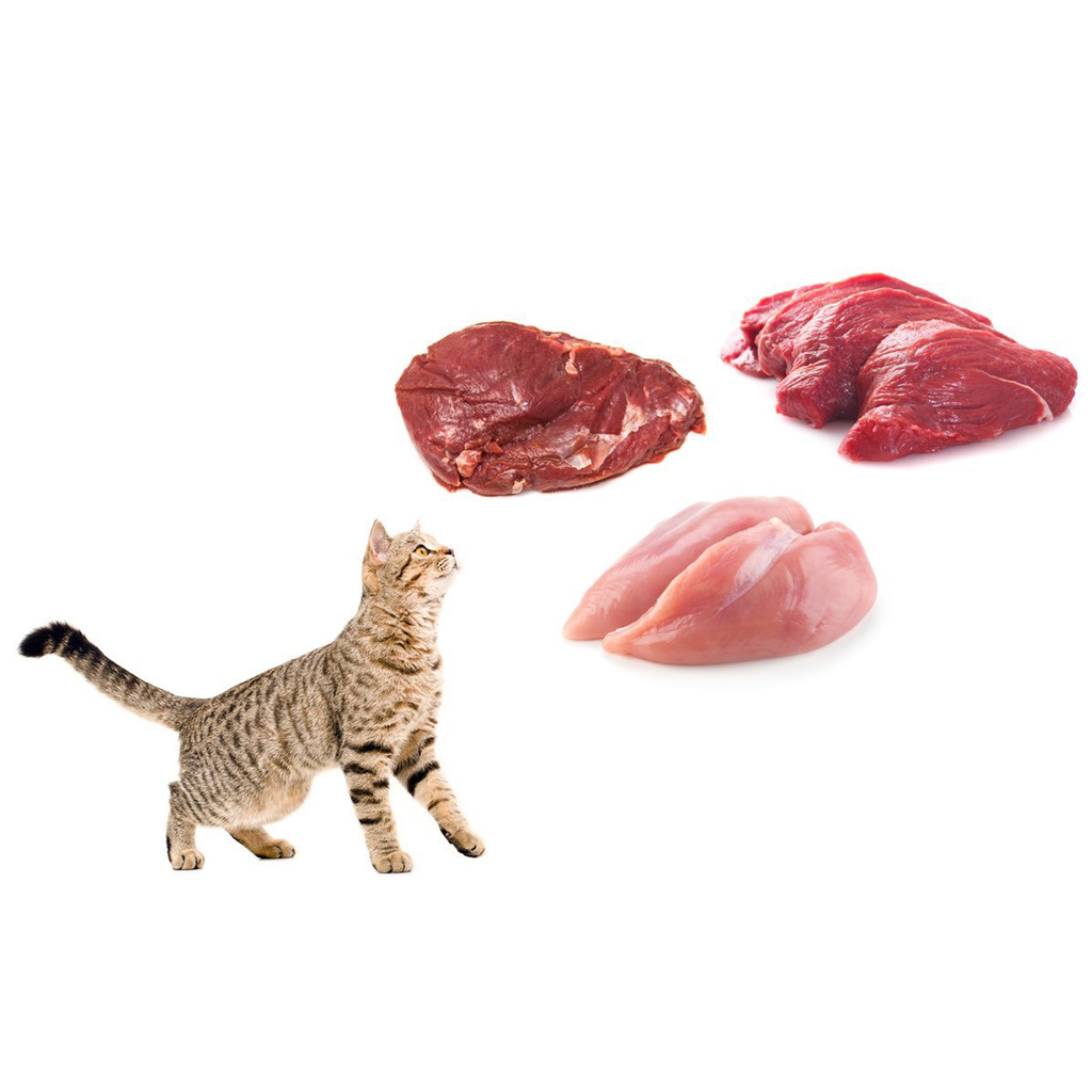 Cat Raw Food Starter Pack - Home Delivered | Raw & Fresh
