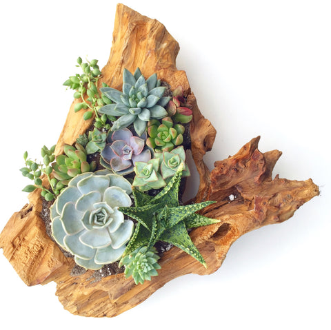 Driftwood Arrangement