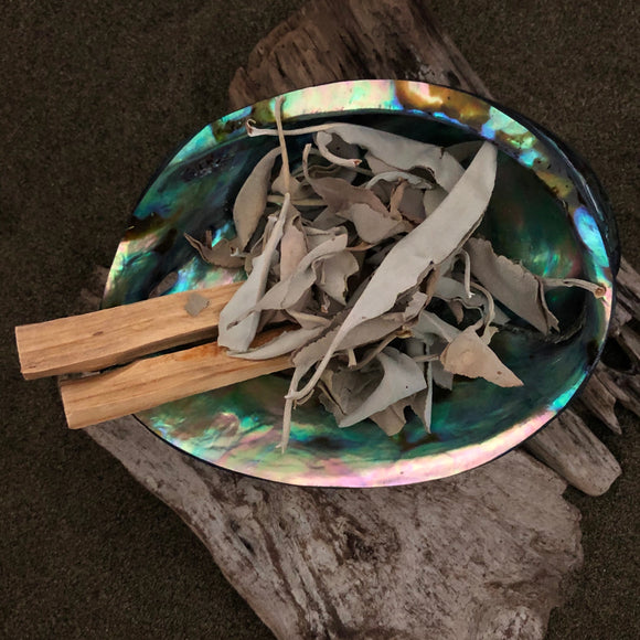 White Sage with Palo Santo in Paua Shell