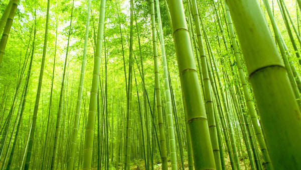 Why Are Bamboo Products So Eco-Friendly