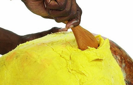 Goldstar Yellow Unrefined Shea Butter by pound. Choose either 3, 5 or 10 pounds with FREE SHIPPING