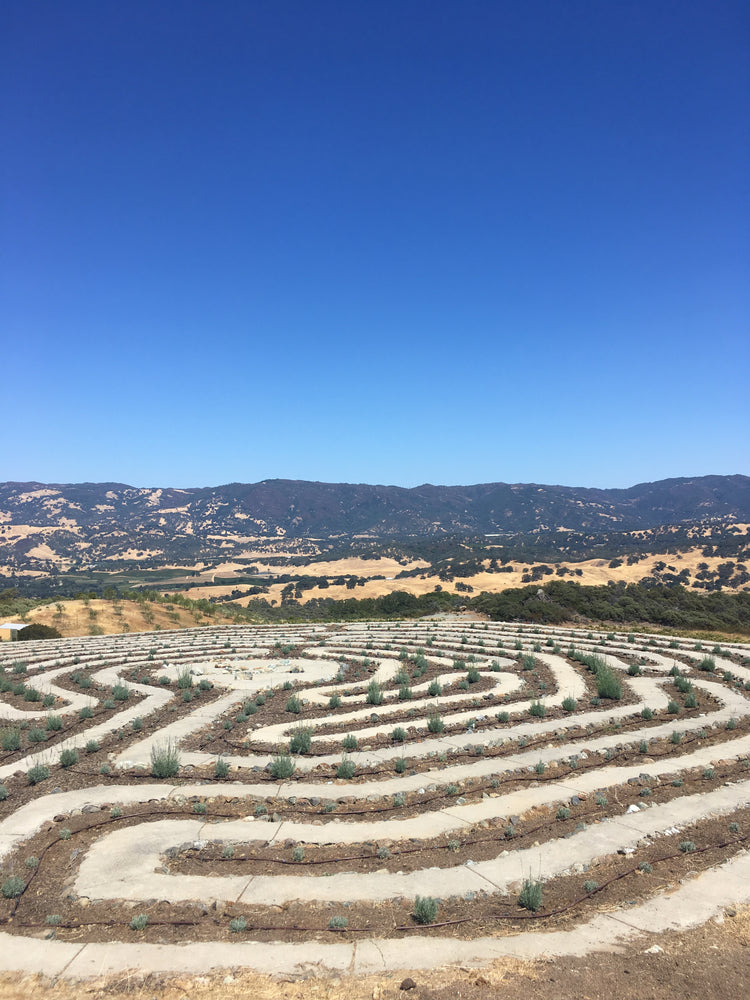 Load image into Gallery viewer, Lavender Labyrinth at SunHawk Farms