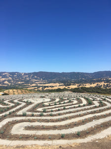 Lavender Labyrinth at SunHawk Farms