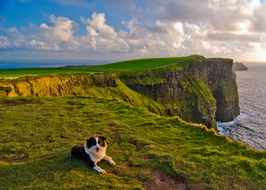 Image - Cliffs of Moher & Dog