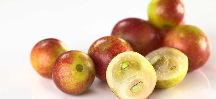 Nature's Highest Levels of Vitamin C – Camu Camu