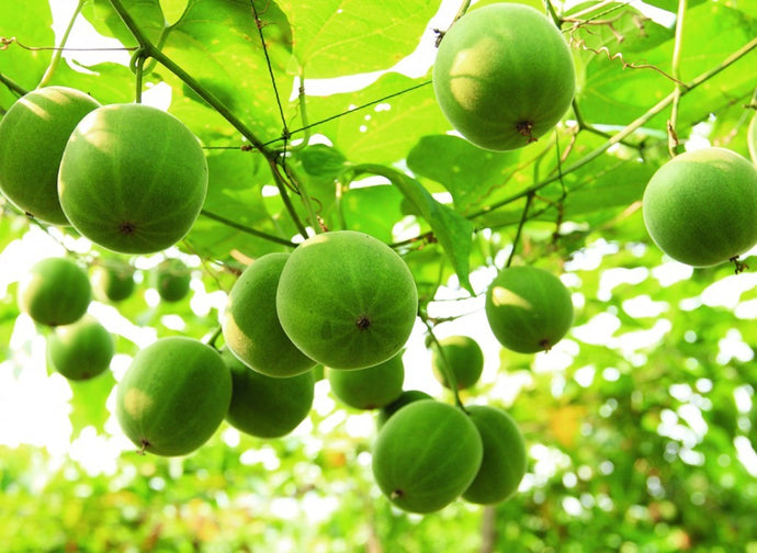 Monk fruit – the natural sweetener that won't spike your blood sugar