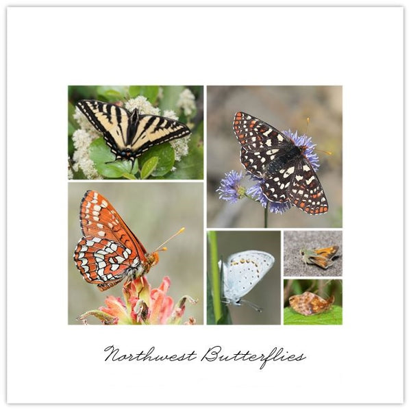 Northwest Butterflies Collage Print
