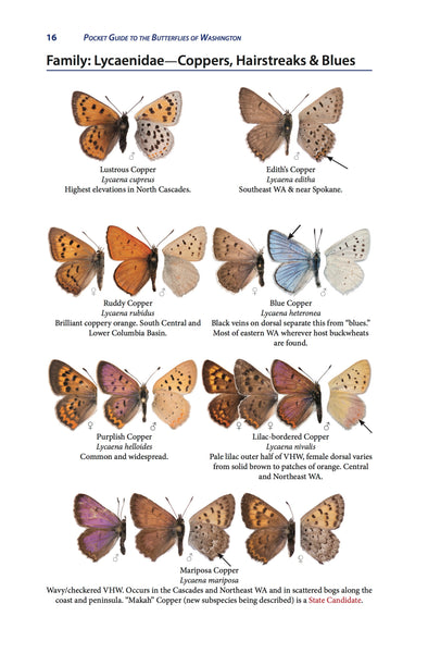 Pocket Guide to the Butterflies of Washington, 2nd ed