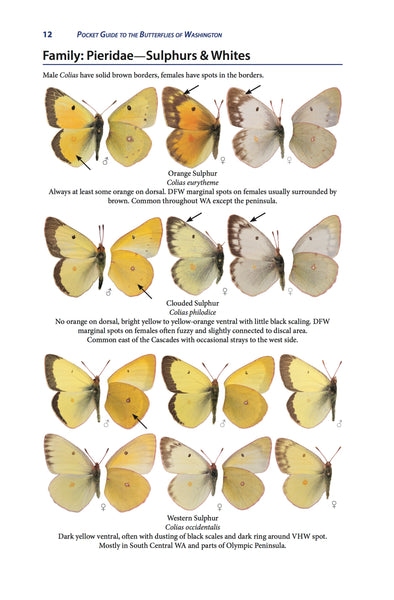 Pocket Guide to the Butterflies of Washington