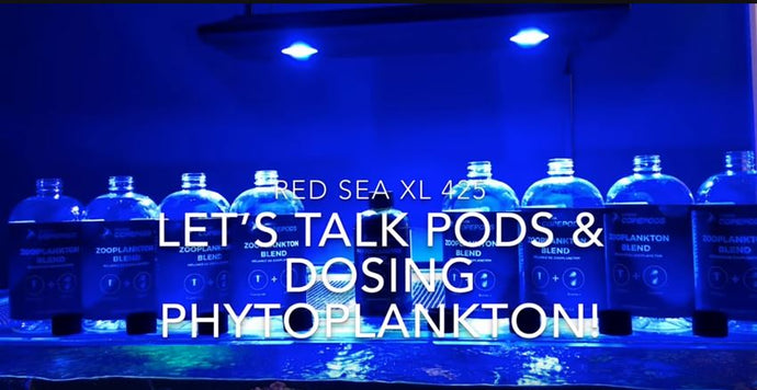 Tank Seeding and Phytoplankton Dosing on YouTube with Reefgrrl