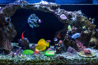 saltwater-fish-aquarium