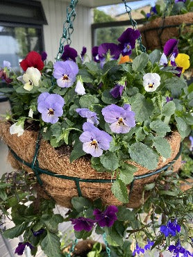 Mixed Annual Baskets