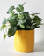 Elemental Sun Planter Yellow - Medium