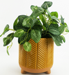 Zari Planter - Mustard Large